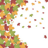 Autumn leaves. Autumn colorful leaves on white background Royalty Free Illustration