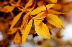 Autumn leaves. A Colourful Autumn Leaves Closeup Royalty Free Stock Photo