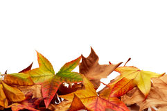 Autumn leaves. On a white background Stock Image