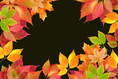 Autumn leaves. On a black background stock photography