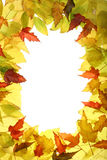 Autumn leaves. Frame made of yellow and red autumn leaves Royalty Free Stock Image