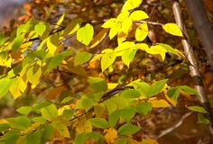 Autumn leaves. And sunlight stock photography