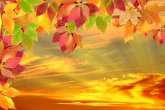 Autumn leaves. Against the sunset Royalty Free Stock Photography
