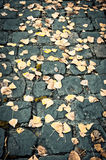 Autumn Leaves. Golden leaves have fallen onto old cobblestones in Europe Stock Photo