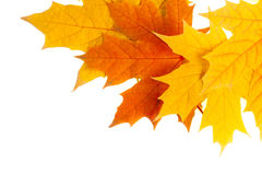 Autumn leaves. Isolated on white Stock Photography