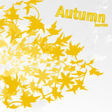 Autumn Leaves. Card with autumn maple leaf Royalty Free Stock Photo