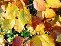 Autumn Leaves. In The Fall Stock Photos