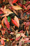 The autumn leaves Stock Images