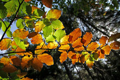 Autumn leaves. In forest near city Ružomberok, Slovakia stock photography