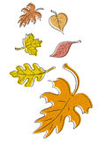 Autumn Leaves vector Stock Photos