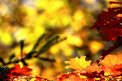 Autumn leaves. Background with vibrant fall colors Royalty Free Stock Images