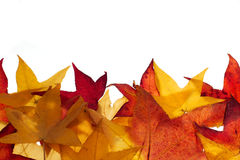 Autumn leaves. Colorful fall leaves making a border or background Royalty Free Stock Photo