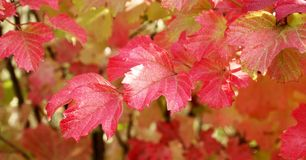 Autumn leaves. Some autumn leaves on a tree Royalty Free Stock Photography