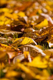 Autumn leaves. The picture shows colorful leaves royalty free stock photo