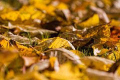 Autumn leaves. The picture shows colorful leaves royalty free stock images