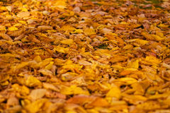 Autumn leaves. The picture shows colorful leaves stock photos