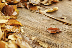 Autumn Leaves. On a tree stump depicting Autumn season Stock Photo