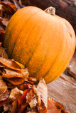 Autumn Leaves. And pumpkin on a tree stump depicting Autumn season Royalty Free Stock Photo