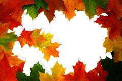 Autumn leaves. Leaves on white background Royalty Free Stock Photography