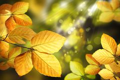 Autumn leaves. Autumn background with leaves and sparkle light Royalty Free Stock Photography