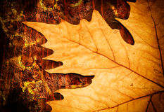 Autumn leaves. Red Autumn leaves and wood Royalty Free Stock Image