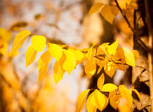 Autumn leaves. Autumn gold, red and yellow leaves, fall Stock Photo