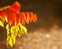 Autumn leaves. Autumn gold, red and yellow leaves, fall Royalty Free Stock Photo