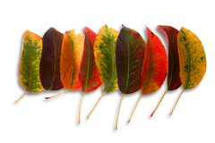 Autumn leaves. Photo of various autumn leaves. Isolated on white background Royalty Free Stock Images