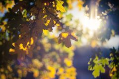 Autumn Leaves. On bokeh background with a sunlight Royalty Free Stock Photography