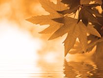 Free Autumn Leaves Stock Photography - 2869752