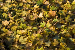 Autumn leaves. On floor on a sunyn day stock photo
