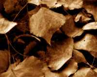 Autumn Leaves. An artistic representation of autumn leaves that can be used as a background royalty free stock photography