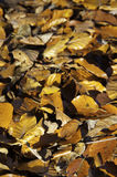 Autumn leaves. Pile of autumn leaves that have fallen Stock Photography