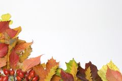 Autumn leaves. Background of Autumn leaves & rosehips ,room for copy Stock Images