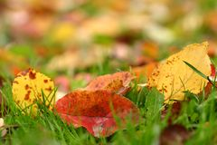 Autumn leaves #3. Apple autumn leaves background. Shallow focus depth on front leaves stock photography