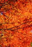 Autumn Leaves Royalty-vrije Stock Afbeelding