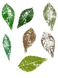 Autumn Leaves. Grunge elements - Autumn Leaves.   Highly Detailed  grunge elements Royalty Free Stock Photography