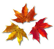 Autumn leaves Stock Photo