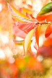 Autumn leaves. On abstract blurred background (very shallow DoF, focus on the first leaf Royalty Free Stock Photography