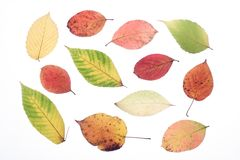 Autumn leaves. On a light background Stock Images