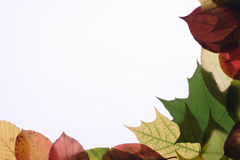 Autumn leaves. On a light background Stock Photo