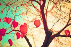 Free Autumn Leaves Royalty Free Stock Photo - 32953485