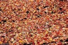 Autumn Leaves fotografie stock libere da diritti