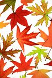 Autumn leaves Stock Photos