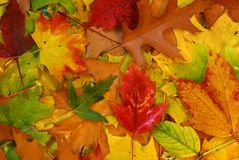 Autumn leaves. A background from autumn leaves in a wood stock photography