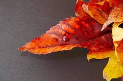 Autumn leaves. Fallen on a slate surface (with clipping path Royalty Free Stock Photography
