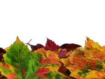Autumn Leaves. Of multiple colors Stock Photos