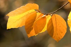 Autumn leaves. In the park royalty free stock photography