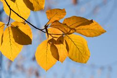 Autumn leaves. On the blue sky royalty free stock photos