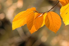 Autumn leaves. In the park stock photography
